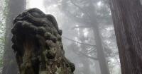 大神山神社奥宮-狛犬