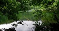 蔦野鳥の森 菅沼