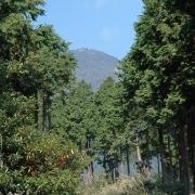 善波峠から念仏山、高取山、浅間山―駅から登る丹沢・大山 その二