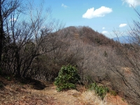 川乗(苔)山トップ