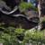 榛名神社に参詣し、神仏習合を思う――夏の伊香保・榛名 その五