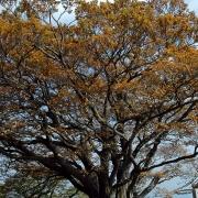 木々が色づく山頂から日向薬師に下る―駅から登る丹沢・大山 その三